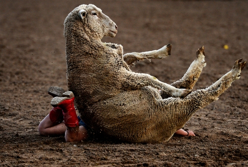Mutton busting sounds like fun! Okay, maybe this isn't the best example...