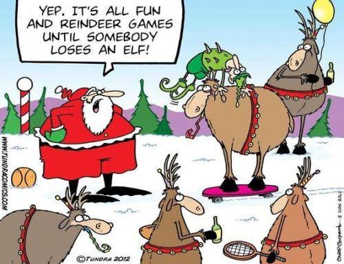 reindeer13