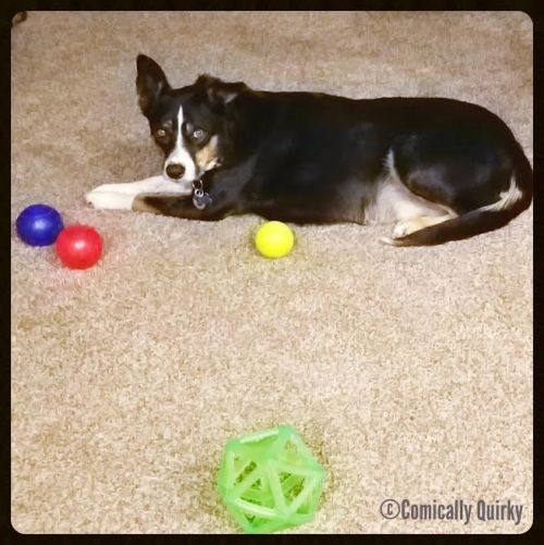 Jett dreams of creating the world's first ball-filled doggie funhouse one day...