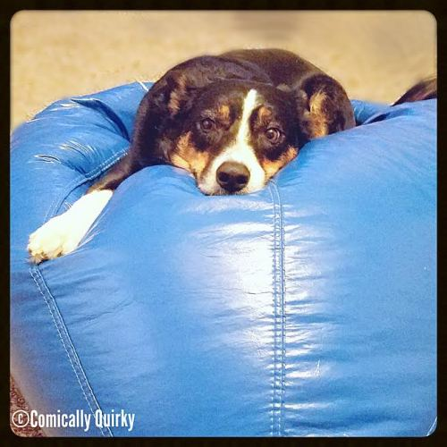 Please, oh please, tell me I can keep this beanbag! It's just so comfy!