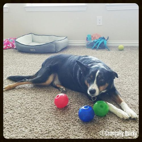 Sqeauky balls are a doggie's best friend... they're loyal, comforting, and always ready for a good time!